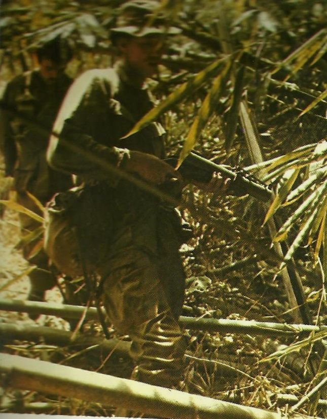 patrol bamboo
