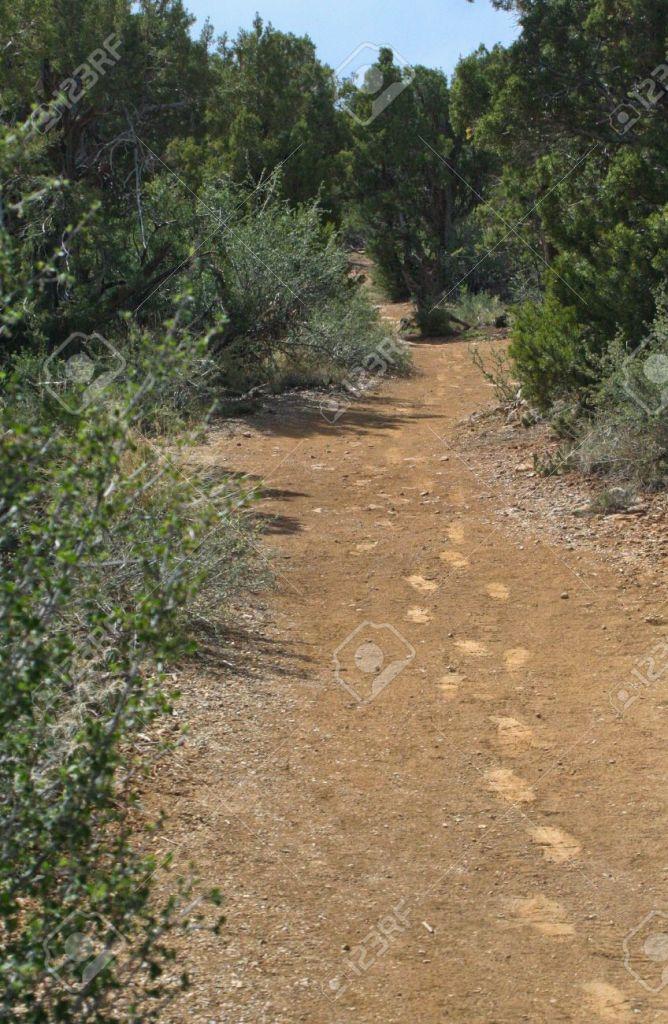14150703-Distinct-human-footprints-on-a-winding-desert-trail-Stock-Photo