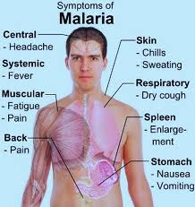 Malaria-Symptoms-inforyt-2