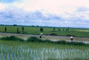 Patrolling-the-rice-paddy